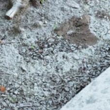 Asbestos-pic1